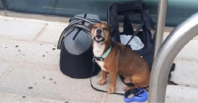 brindisi-cane-abbandonato-in-aeroporto-viene-salvato
