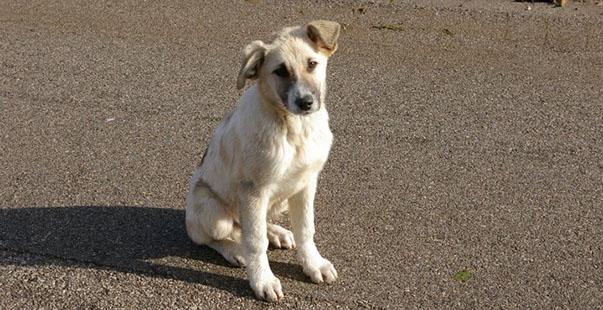 Trecastelli, cane abbandonato attende invano il ritorno del proprietario