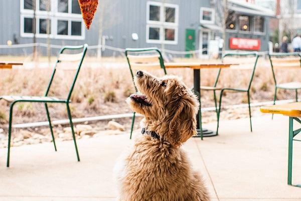 cane e pizza