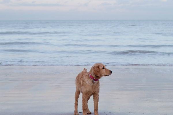Il cane beve acqua di mare e non si ferma? Ecco che fare