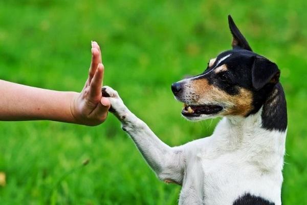 cane imita le azioni umane