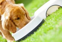 cane mangia dalla ciotola