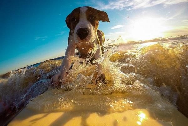 cane che cavalca un'onda