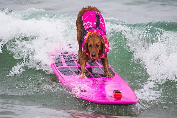 ricochet cane sul surf