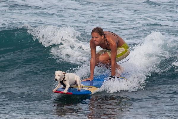 cane e ragazza su surf