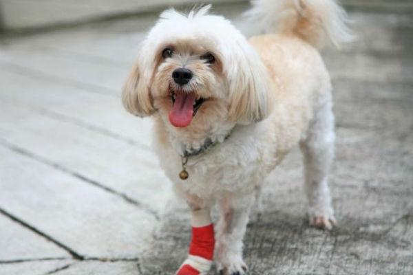 Cani e strappo del legamento crociato: cosa sapere?