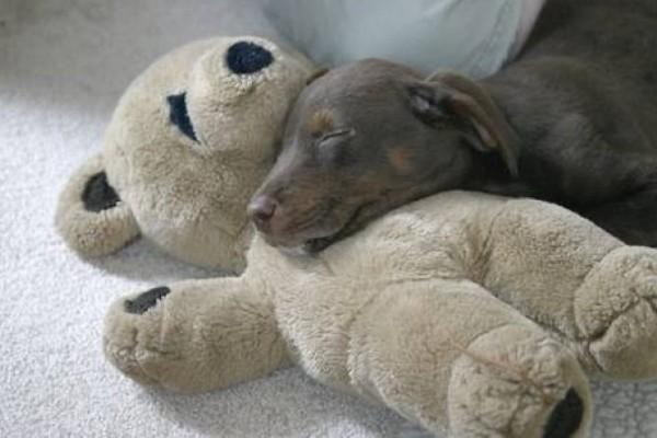 un cane dorme