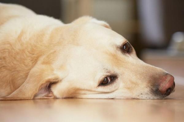 Cane e cattiva alimentazione: tutti i campanelli d'allarme