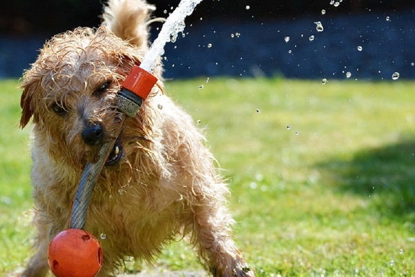 Cane e vasca idromassaggio: vanno d'accordo?