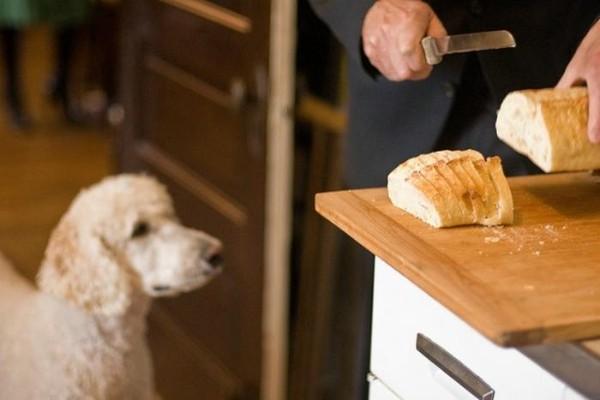 I cani possono mangiare il pane integrale?