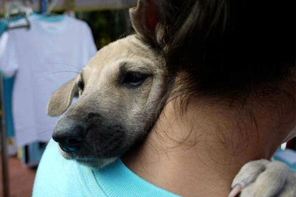 Il cane ha paura del veterinario? Ecco come aiutarlo