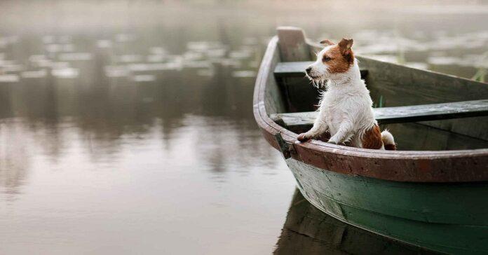cane su barca