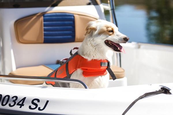 Cane in barca: tutte le regole per una gita sicura con Fido