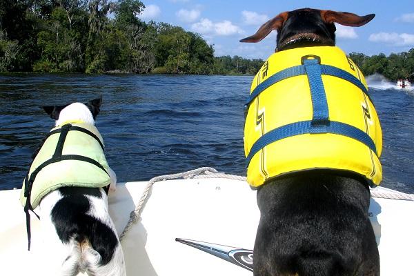 cani con salvagente