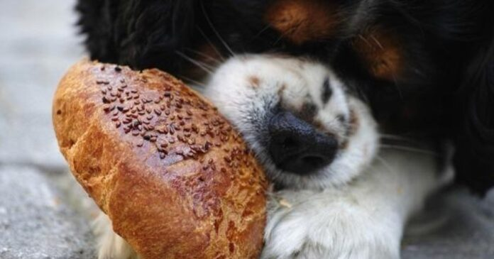 cucciolo mangia il pane