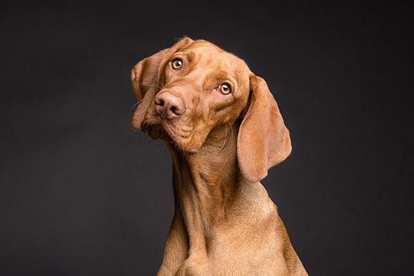 i benefici delle vongole nei cani