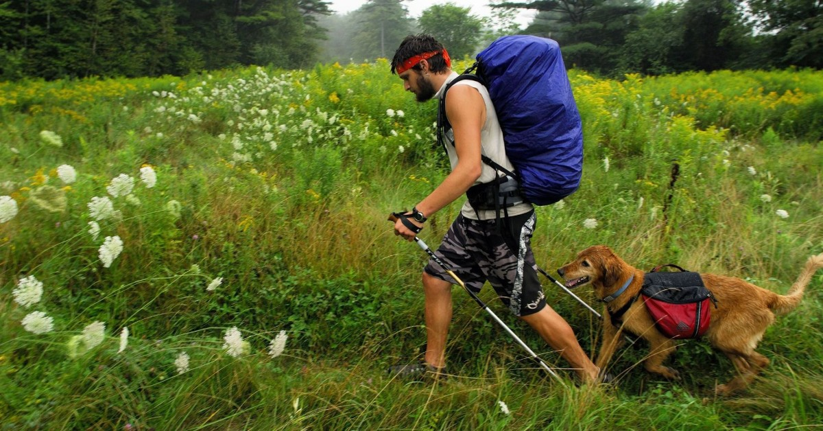 cane fa nordic walking