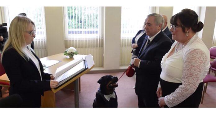 cane-scelto-come-testimone-di-un-matrimonio