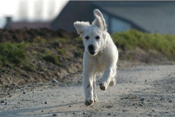 Il cane si arrabbia se corri? Ci sono dei motivi, ecco quali