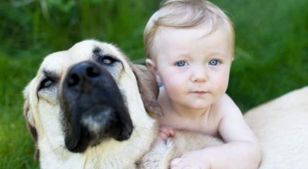 cani-amici-bambini