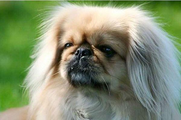 Cani coccolosi e teneri: 12 razze super affettuose