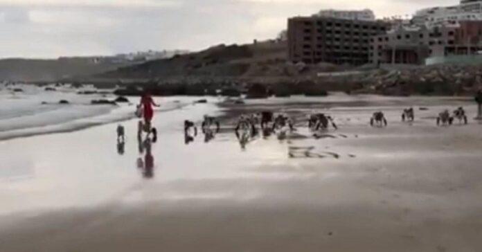 cani-con-disabilita-tornano-a-correre-felici-sulla-spiaggia