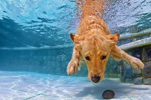 cane sott'acqua