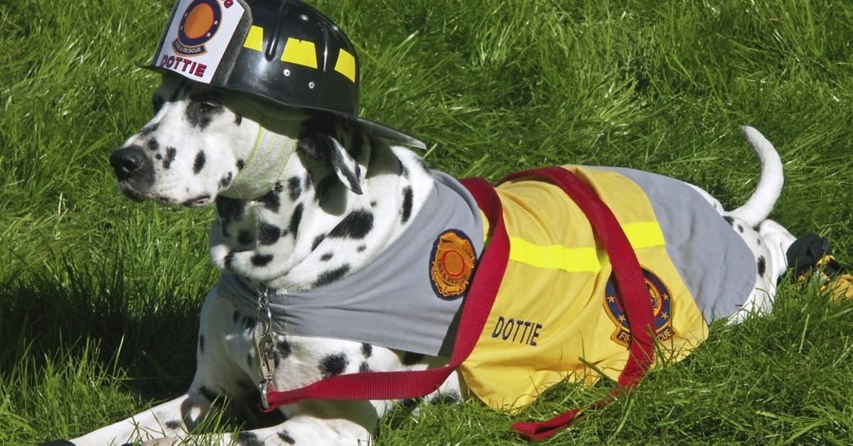 cani possono sentire le perdite di gas