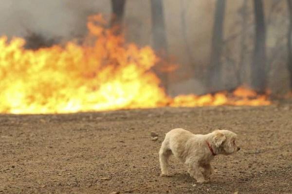 cane in pericolo