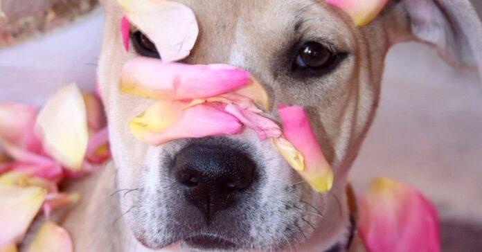cane con fiori