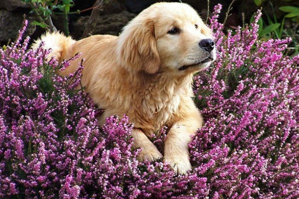cane annusa fiori