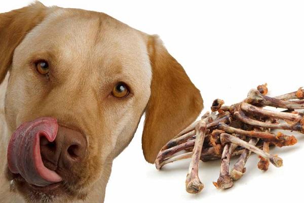 Cane e ossa di pollo: perché sono dannose e cosa rischia mangiandole