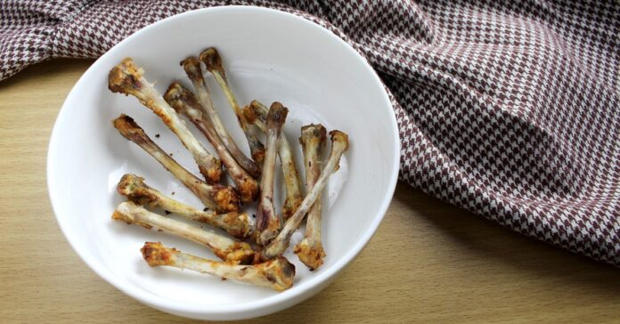 cane e ossa di pollo cotte