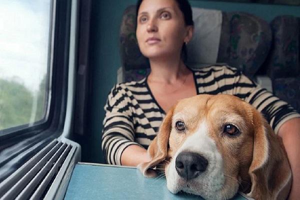 cane viaggia in treno