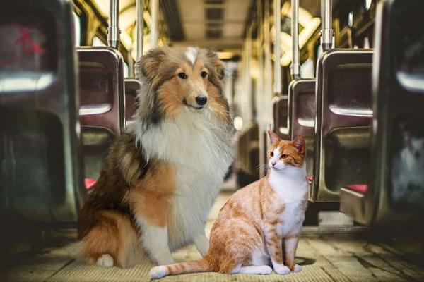 cane e gatto su treno