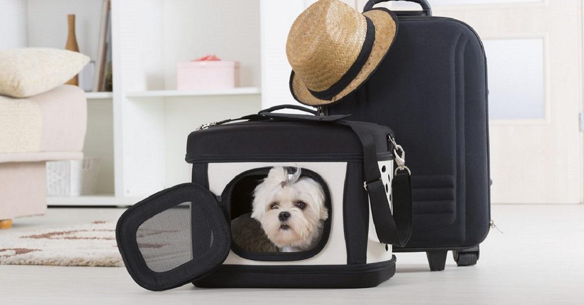 cane da viaggio