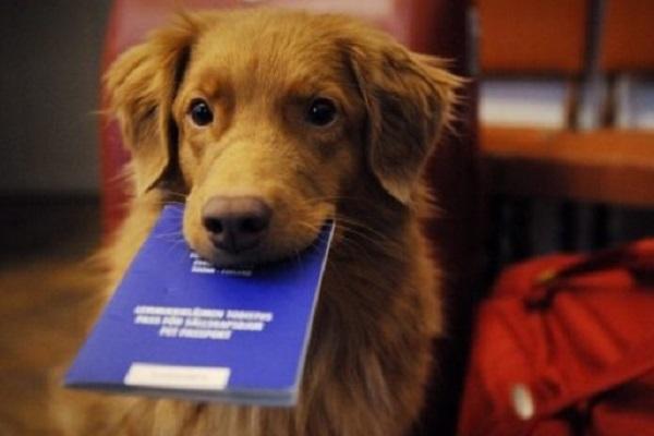 cane e libretto sanitario