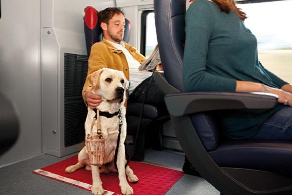cane in treno con museruola