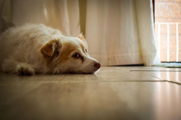 cane a terra