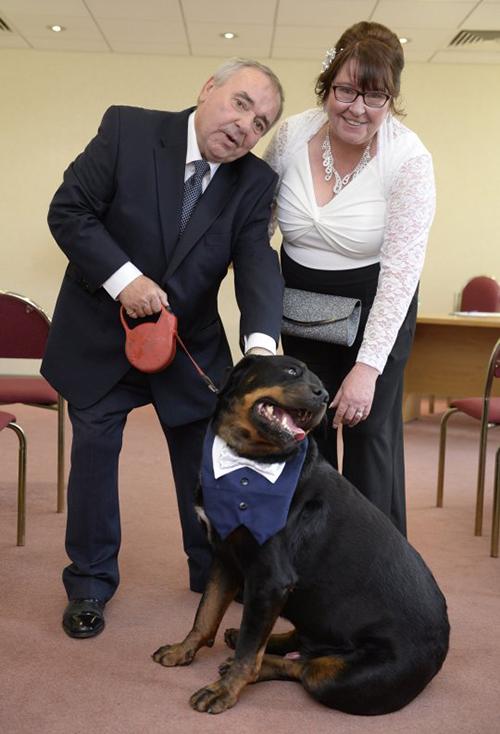 Cane fa da testimone di nozze dopo essere stato adottato