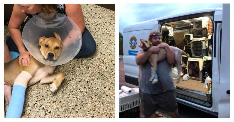Columbo cane salvato dai ciclisti: una storia d'amore