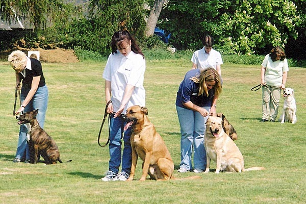 addestramento cani di gruppo