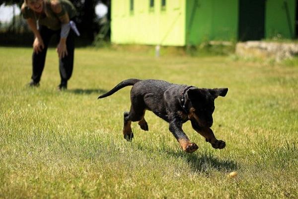 addestramento cucciolo di cane