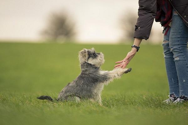 cane impara comando