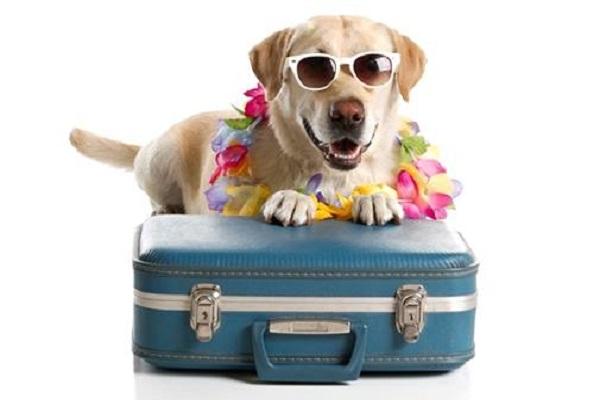 cane e valigia