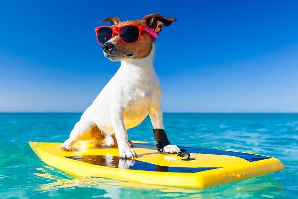 cane che surfa