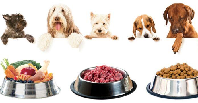 cani e dieta barf