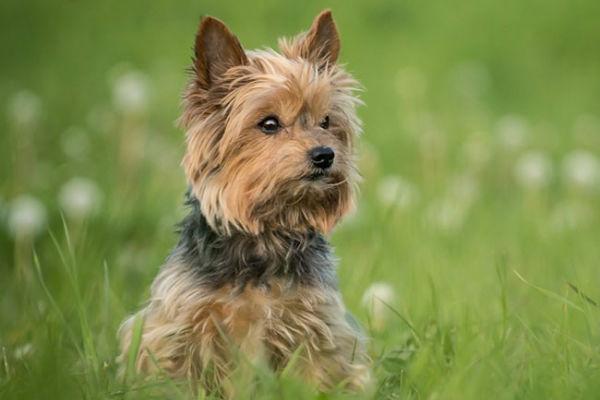 Disordini della tiroide nel cane: come affrontarli e cosa sapere