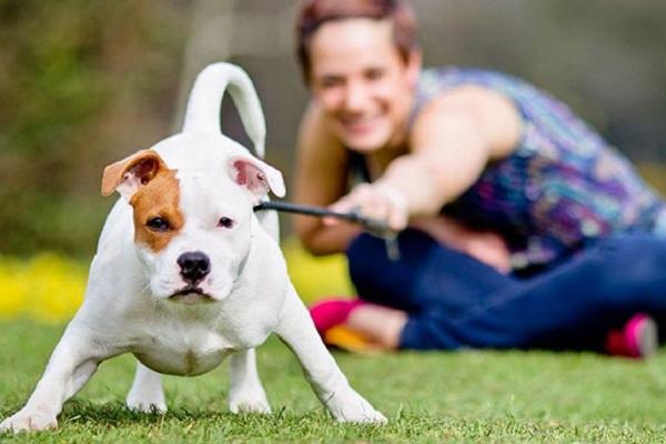 Disturbo bipolare del cane: può esistere? Come comportarsi?