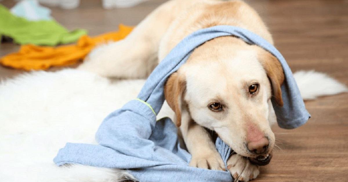 cane gioca con calzini